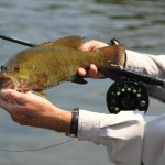 Fly rod smallmouth