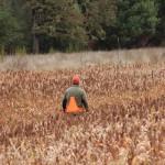 pheasanthunting012