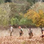 pheasanthunting013