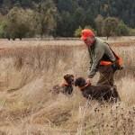 pheasanthunting015