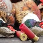 pheasanthunting019