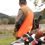 pheasanthunting020