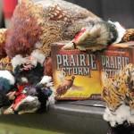 pheasanthunting022